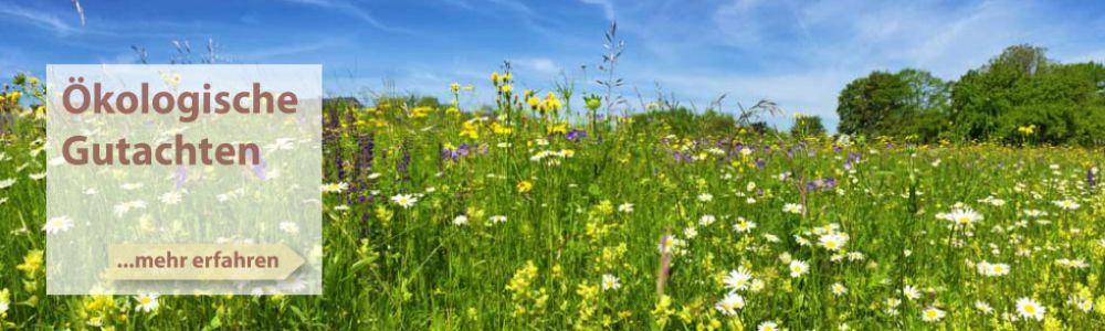 Ökologische Gutachten